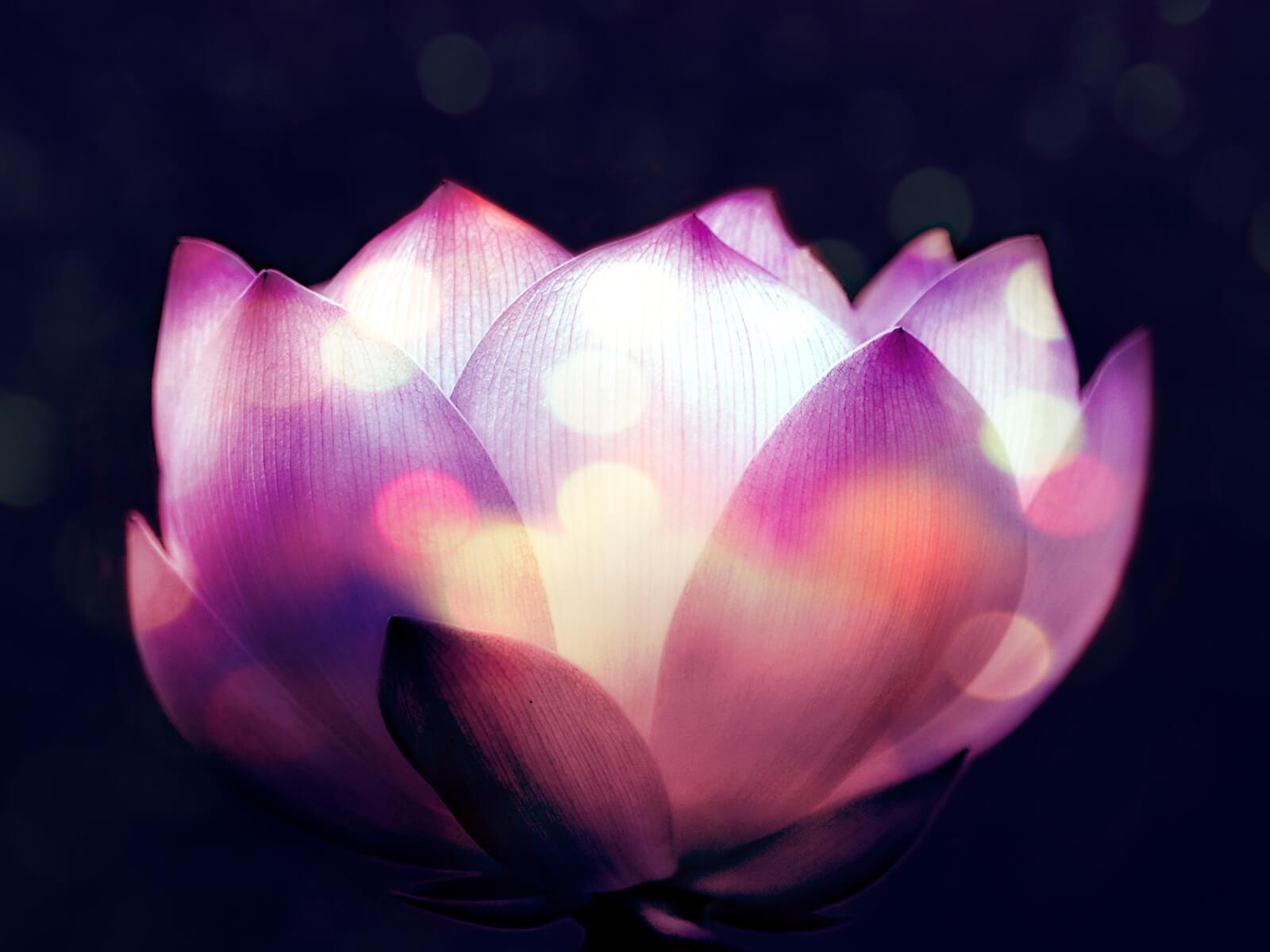 kalishiva-centro-yoga-torino